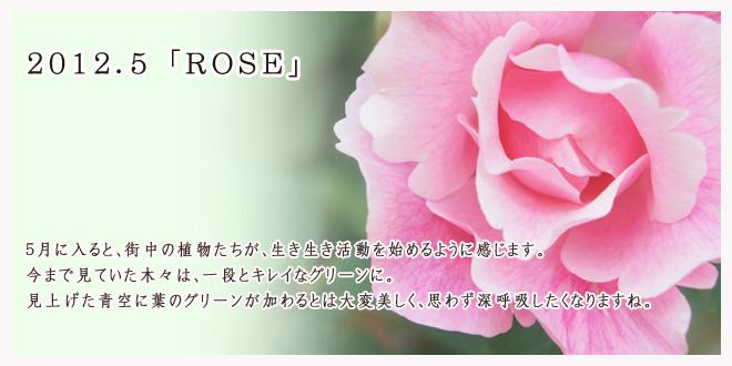 2012.5 ROSE